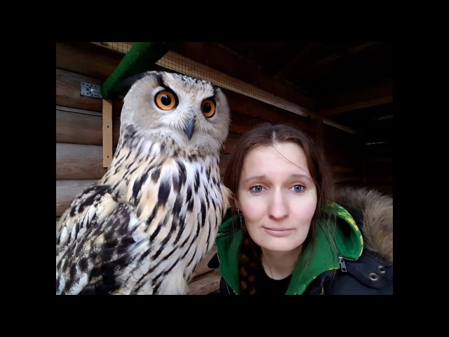 Где в Москве можно посмотреть на ручного филина и ловчих хищных птиц и пообщатьс...