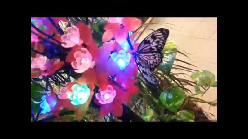 Сад Миндо - тропическая сказка