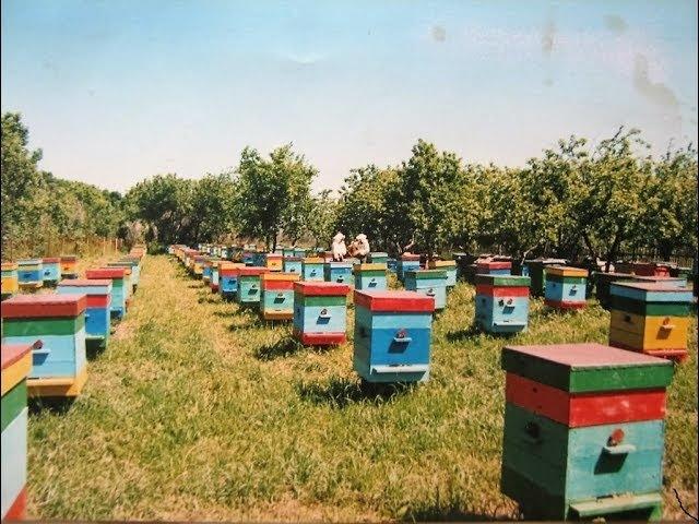 Пчелопакеты 2018,пчеломатки 2018: бакфаст,элгон,карника,т.89603022455