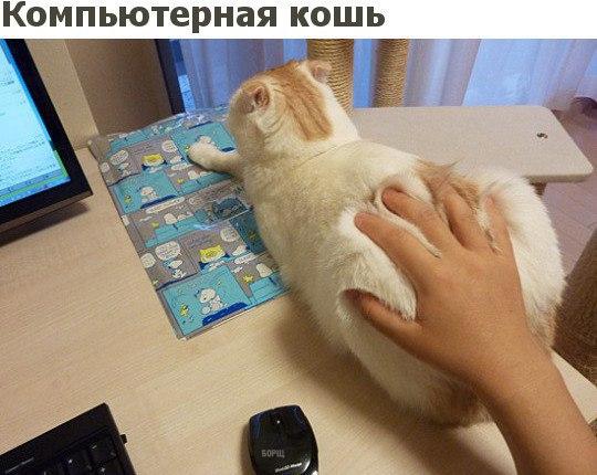 Фото №456284096 со страницы Вахтанга Антии