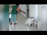 Подборка милых и смешных животных