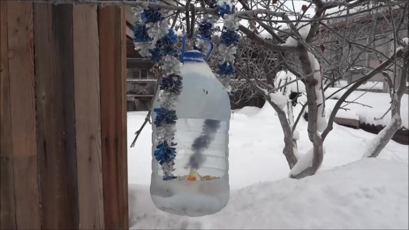 Виноград под прикрытием снега 2018год.