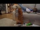 как габасит кот ребёнка
