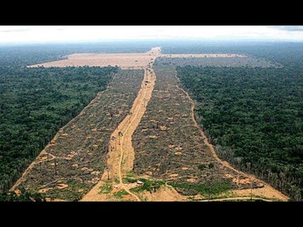 A AMAZÔNIA PEDE SOCORRO AcheiC