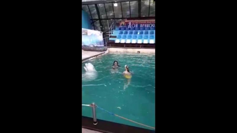 Классно поплавала 😀👍🔥сюрприз от бабушки ко дню рождения 🎉🎈🐬🐬🐬🎁