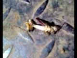 саранча и муравей