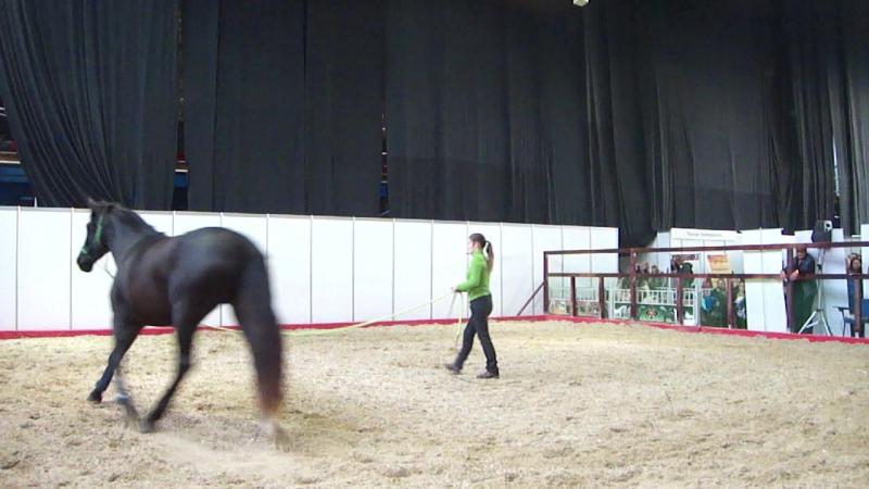 Эквирос 2017. Дария Бойцова - Система воспитания лошадей Training with Care (1)
