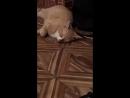 оccultus cat