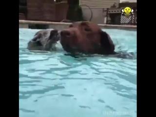 Пес и енот