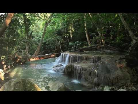 Пение птиц шум реки музыка леса для снятия стресса Rainforest Sounds Water Sound Nature Meditation