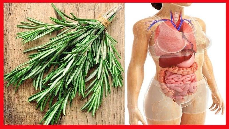 Healing properties of rosemary