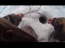 Что ловится на зимнюю удочку помимо рыбы Поймали сойку на удочку