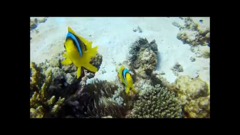 Marsa Alam Three Corners Fayrouz Plaza Qumox Sj 4000 Diving 2017
