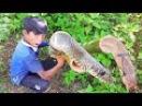 Вау Удивительный Умный Мальчик Ловить Больших Змей С Помощью Бамбуковой Ловушк