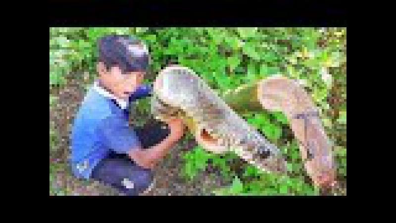 Вау! Удивительный Умный Мальчик Ловить Больших Змей С Помощью Бамбуковой Ловушк...