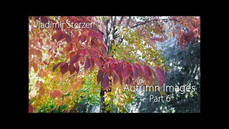 Autumn Images (Part 6) Nice video with beautiful piano music. Vladimir Sterzer