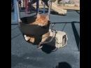 Песенка про кота