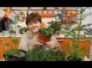Во саду ли в огороде Результаты Экспериментов С Семенами