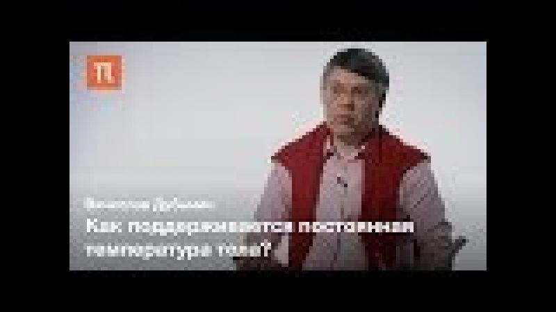 Внутренняя чувствительность — Вячеслав Дубынин