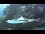 Аnimals,Tiere, Unterwasser Welt, Haifische