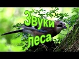 Звуки леса и волшебная музыка флейты. Relaxing Native Flute &amp Birds Singing.