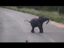 Забавный слонёнок