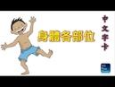 兒童學習系列: 中文字卡 - 身體各部位