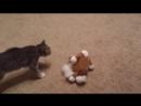 кошка больная у нас!(была)