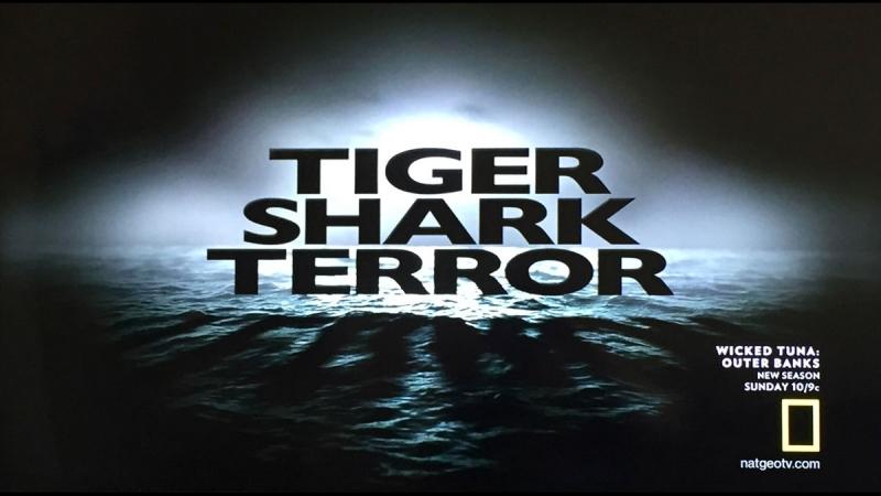 Ужас тигровой акулы Tiger shark terror