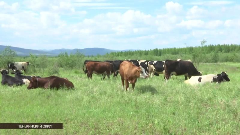 Овощеводство и животноводство возрождается в отдаленных поселках Магаданской области