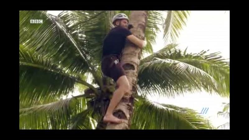 2018.04.23. Тренинг на местах. Серия 2 – Тагбануа, Филиппины (HD-1080p)