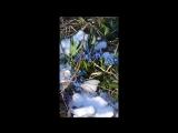 Синенький скромный платочек
