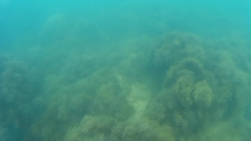 Морские волки 4