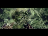 Snoop dogg a.k.a. Snoop lion - Smoke the weed