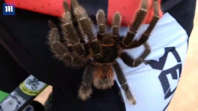 Ядовитые пауки-птицееды пугают британцев