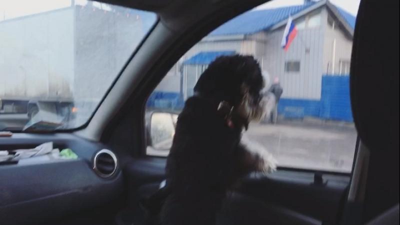 Собака против ГИБДДшника