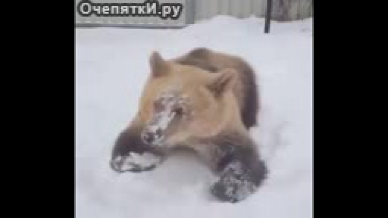 миша помогает снежок чистить