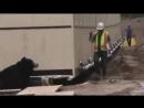 Человек переодетый в медведя здорово напугал строителя.mp4