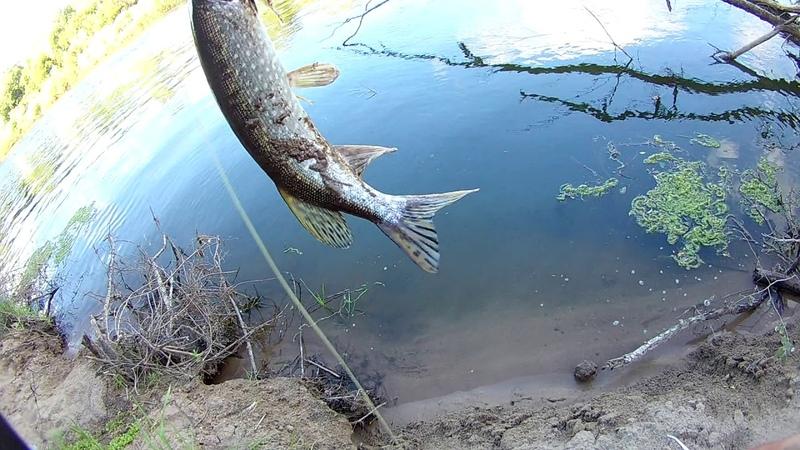 Щука, Окунь, Судак. Не рыбалка а сказка просто.