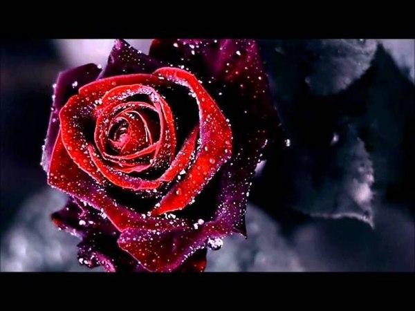 Kotkan ruusu Eino Grön