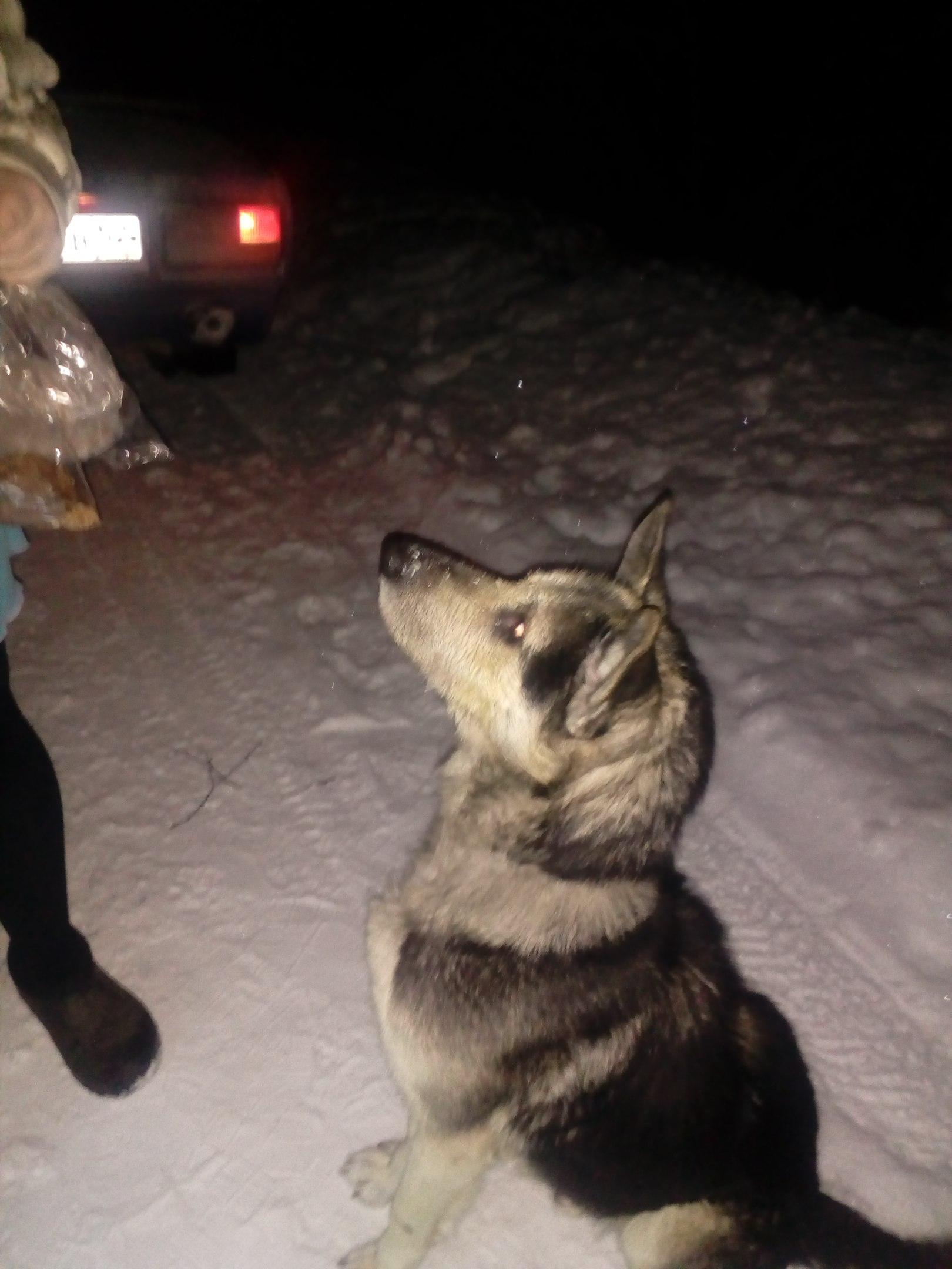 Она замерзнет ,или её съедят волки.