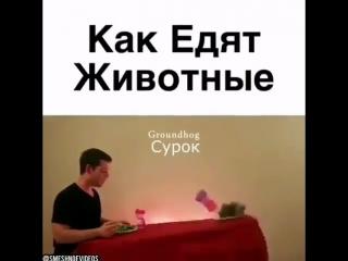 videos_hype_BkkyX0gARTM.mp4
