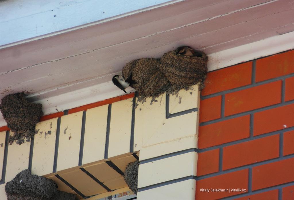 Гнездо ласточки Авразия Алматы
