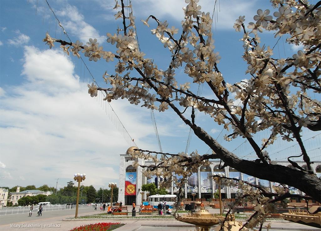 Дерево Ала-Тоо Бишкек
