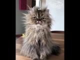 Кот моего утра