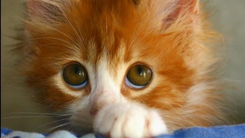 Рыжий кот. Веселая детская песенка
