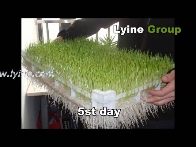 Lyine Brand hydroponic system fodder sprout machine for livestock animal cattle horse goat poultry