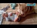 Собаки играют с детьми 7 смешное интересное видео для настроения прикол домашние питомцы