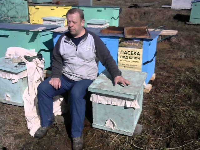Привезли купленных пчёл на пасеку, что дальше делать.
