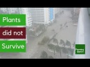 Plants didn't survived hurricane irma Brickell Miami after returning from Hurricane IRMA InStory 021